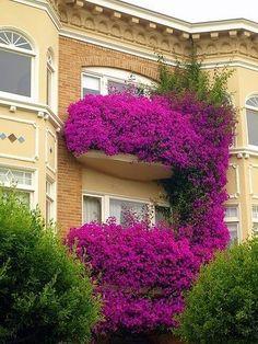 bougainvillea balconies