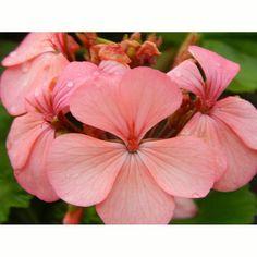 Las flores del jardín dicen #unetealrosa #diacontraelcancerdemama Exitosa semana para todos! #emparamados