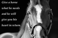 horse sayings | United we Ride • justmanonx: Horse quotes. So true and beautiful…
