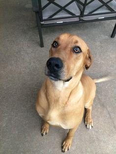 I am a good boy and I LOVE you! http://ift.tt/2mLhHTU