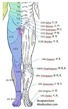 Locations of Acupuncture Points Used for Urinary Incontinence in Relation to Anterior Dermatomes: http://www.acupuncturemoxibustion.com/acupuncture-points/overactive-bladder-points/