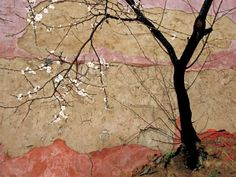 'Plum Tree', China - by Raymond Gehman  (via National Geographic)