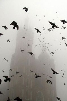 Fog - love the birds in the foreground.