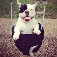This fair swinging dame. | 31 Photos That Prove Bulldogs Are Beautiful