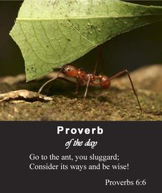 "Proverbs 6:6 - ""Go to the ant, you sluggard; consider its ways and be wise!"""