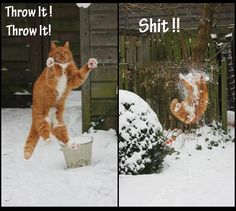 Funny ~ Picture ~ Quote ~ Cat ~ Snow