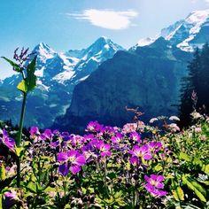 Schweiz / Suisse / Svizzera / Svizra / Switzerland