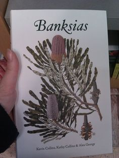 Beautiful illustrated guide to my favourite plants #banksia #book #perth