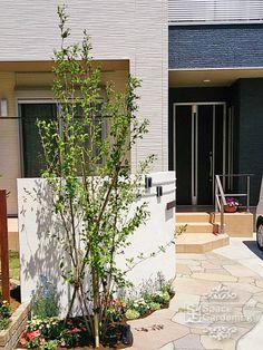 植栽 シンボルツリー 落葉樹 シャラ Garage Doors, Outdoor Decor, Plants, Plant, Carriage Doors, Planets
