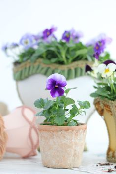 Pretty pansies in pots