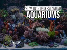A step-by-step aquarium care guide. Learn about aquaria and how to build and maintain one. DIY aquariums for various plants & animals. Build A Terrarium, Moss Terrarium, Terrarium Plants, Diy Aquarium, Aquarium Design, Terraria, Types Of Moss, Ants In House, Floating Plants