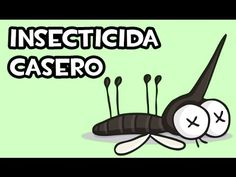 Insecticida Casero con tabaco   Economico - YouTube