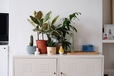 Low Maintenance House Plants - How Often Should You Water | Apartment Therapy