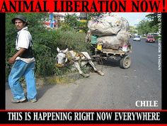 Chile - Having to do this day after day is their death row.