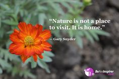 Nature is a gift of God! He created it for our understanding. Home is where nature is! It is nature which plays both the role of a teacher. Nature Quotes, Nature Nature, Inspirational Articles, Google Images, Places To Visit, World, Spirit, Deep Quotes, Plants