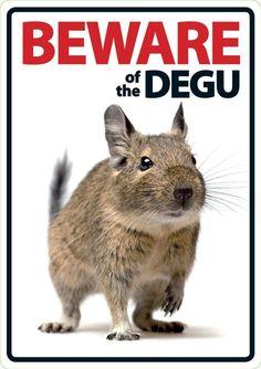 Beware of the Degu
