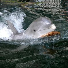 Dolphin Quest - Luxury Oahu Resort | The Kahala Hotel & Resort