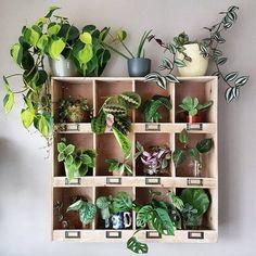 Own green shelf // yo home plant shelves, green shelves, pl Green Shelves, Plant Shelves, Indoor Garden, Indoor Plants, Home And Garden, Indoor Herbs, Indoor Outdoor, Deco Nature, Nature Decor