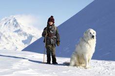 Cane da montagna dei Pirenei - 1