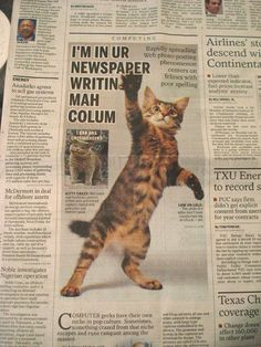 Kitty in the paper