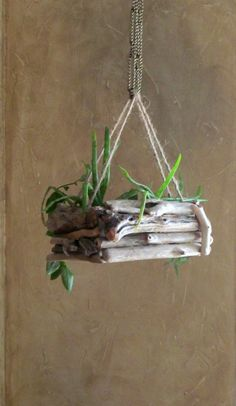 Going with Perfection by Decorating House with Hanging Orchids - diiiy - Orchideen Driftwood Jewelry, Driftwood Projects, Driftwood Art, Twig Crafts, Diy And Crafts, Hanging Orchid, Deco Nature, Branch Decor, Garden In The Woods
