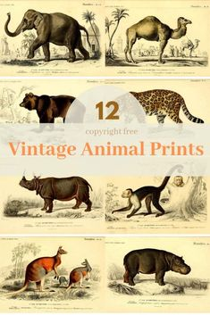 Decorate your home or classroom with these fabulous high resolution vintage animal illustrations. Vintage Abbildungen, Vintage Artwork, Vintage Ephemera, Vintage Images, Vintage Posters, Clipart Vintage, Vintage Paintings, History Posters, Art History