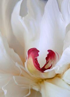 flower … Más