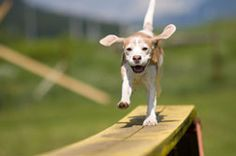Dog agility is a fun sport that you and your pet can enjoy together.    All types of breeds and sizes can take part, all they need is a little basic obedience and lots of energy :)