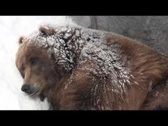 Hibernation video--awesomeee I need this TOMORROW!!! SCIENCE wk 5