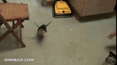 This penguin is so happy to see his zookeeper! -- click through for animated gif :)