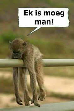 African Quotes, South Afrika, Afrikaanse Quotes, Good Night Quotes, Morning Quotes, African Countries, Cute Funny Animals, Funny Signs, Cute Quotes