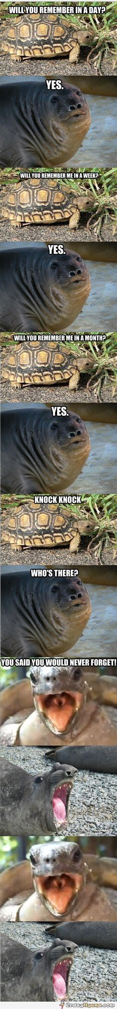 Humorous conversation between a seal and a turtle about not forgetting each other