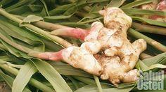 Esta poderosa raíz destruye el cáncer de ovarios, próstata y colon, y es...