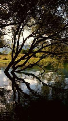 Lago di Barrea (abruzzo) Pesca alla carpa