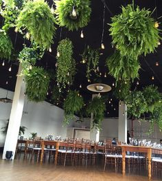 indoor ferns and Michaels dreamy wedding