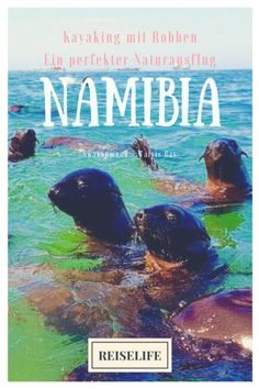 Namibia Roadtrip: Abenteuer pur - Kayaking mit Robben Travel Advice, Travel Guides, Deserts Of The World, Namibia, Roadtrip, African Safari, Africa Travel, Ghost Towns, Mauritius