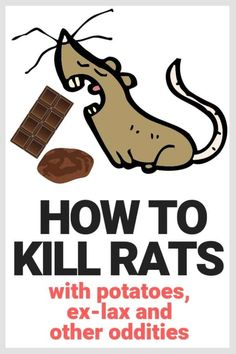 how to get rid of rats, mice and rodents with natural non-toxic methods that are just weird. Potatoes and exlax kill rats? who knew. Organic pest control methods that actually work! Killing Mice, Roof Rats, Getting Rid Of Rats, Mice Repellent, Insect Repellent, Natural Rat Repellent, Mouse Poison, Rat Traps, Mouse Traps