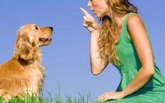I primi comandi per educare un cane L'educazione del nostro amico a quattro zampe è essenziale per una convivenza senza problemi, nell'articolo i primi comandi basilari #addestramentocane #educarecane #cane