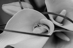 Sunshine Coast Wedding Photographer - Portfolio #details