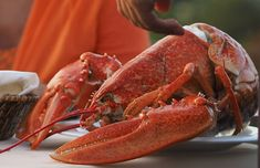 Découvrez la recette de la sauce américaine, aussi appelée sauce armoricaine, délicieuse avec les poissons à chair ferme et les crustacés.
