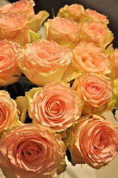 one of my favorites - My favorite flower Roses