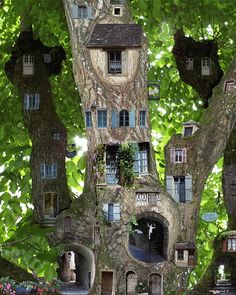 Amazing tree of fairy houses. Wonder if this would work in an old tree stump?