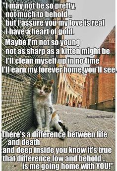 Aww...Pick a used cat next time. They are ready to love you if you give them a chance to thrive....