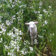 Discovered by Find images and videos about aesthetic, nature and flowers on We Heart It - the app to get lost in what you love. Cute Baby Animals, Farm Animals, Animals And Pets, Cute Creatures, Beautiful Creatures, Animal Kingdom, Fur Babies, Pictures, Preston Winery