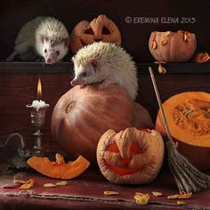 Halloween is over by Elena Eremina on 500px
