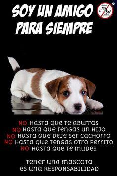 Adoptar a un cachorro no es ir a comprar a la esquina, es tener una vida en tus manos, una responsabilidad, alguien que espera que le des de comer y beber, alguien que tienes que pasear, bañar, llevar al veterinario, poner las vacunas para que su salud sea buena; pero tambien ellos nos devualven el mas puro e inmenso sentimiento que nos pueden ofrecer: EL AMOR. Yo creo que el amor es mas importante que el alimento, el alimento se compra, al amor no lo podes comprar, lo tenes que cultivar y…