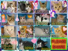 These cats desperately need a save by 3pm Thursday 15/1/15. If you are a rescue or know a rescue that can help, please contact Renbury Farm Animal Shelter, NSW on 02 9606 6118 or email info@renbury.com.au