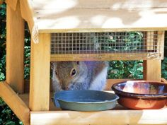 I caught the thief red handed, the squirrel wasn't bothered and lingered in the bird house just in case there was a top up.