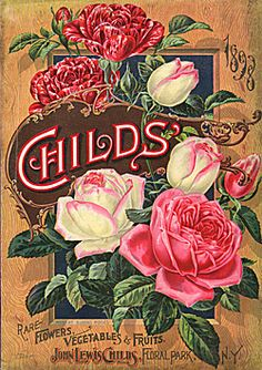 Catalog Information    Company Name:  John Lewis Childs    Catalog Title:  Childs 1898 Rare Flowers Vegetables and Fruits (1898)  Publication Information:  Floral Park, NY  United States  Category(ies) of Cover Art:  Flowers  Fruit  Roses  Vegetables