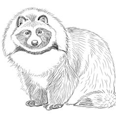 Raccoon dog for #zooly #zoolyartchallenge  Bern working a lot at ye olde part time job so all I'm having time for lately are little sketches when I can get em in. I'm working on a plan to get myself organised and on a better schedule so I have more time to draw and paint. What kind of schedule do you have that helps you make time for the things you love? . . . . . #art #artwork #illustration #instaart #cute #artist #artistic #raccoondog #artsagram #artworld #drawing #sketch #sketchbook…